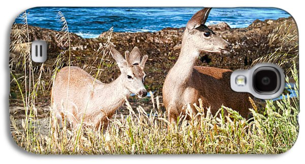 San Francisco Famous Photographers Galaxy S4 Cases - Deer on the Beach at Point Lobos CA Galaxy S4 Case by Artist and Photographer Laura Wrede