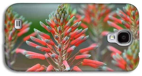 Country Cottage Galaxy S4 Cases - Delicate Aloe - Botanical Photography by Sharon Cummings Galaxy S4 Case by Sharon Cummings
