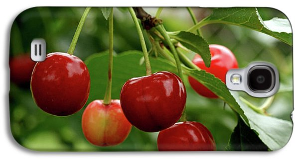 Delicious Cherries Galaxy S4 Case by Sandy Keeton