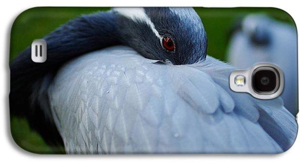 Demoiselles Galaxy S4 Cases - Demoiselle Crane Galaxy S4 Case by Jouko Lehto