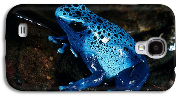 Frogs Photographs Galaxy S4 Cases - Dendrobates Azureus From French Guiana Galaxy S4 Case by Gregory G. Dimijian
