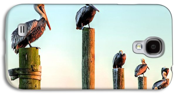 Florida Panhandle Galaxy S4 Cases - Destin Pelicans-The Peanut Gallery Galaxy S4 Case by JC Findley