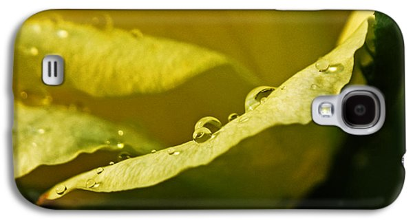 Business Pyrography Galaxy S4 Cases - Dew Drops on Yellow Galaxy S4 Case by Rebecca Davis