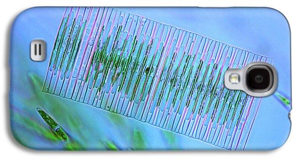 Diatoms And Green Algae Galaxy S4 Case by Marek Mis