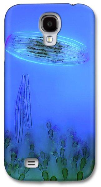 Diatoms And Red Algae Galaxy S4 Case by Marek Mis