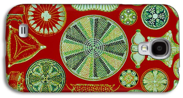 Plankton Galaxy S4 Cases - Diatoms-Ernst Haeckel Galaxy S4 Case by Scott Camazine