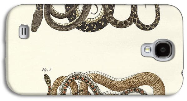 Reptiles Drawings Galaxy S4 Cases - Different kinds of foreign colubrids Galaxy S4 Case by Splendid Art Prints