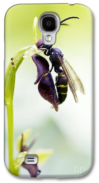 Pollinate Galaxy S4 Cases - Digger Wasp and Fly Orchid Galaxy S4 Case by Tim Gainey