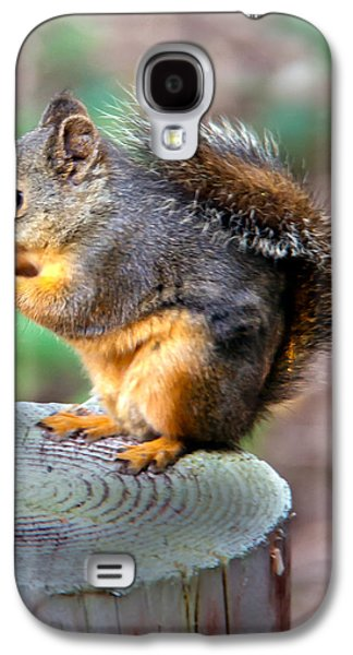 Sciurus Carolinensis Galaxy S4 Cases - Dinner Time Galaxy S4 Case by Robert Bales