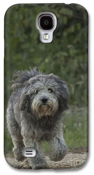 Dogs Pyrography Galaxy S4 Cases - Dog Walking Galaxy S4 Case by Radivoj  Cvetojevic