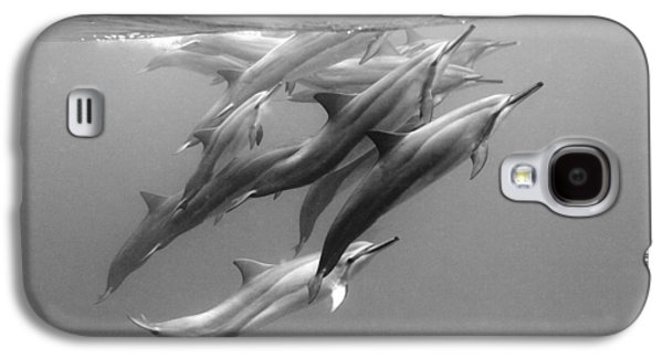 Ocean Art Photography Galaxy S4 Cases - Dolphin Pod Galaxy S4 Case by Sean Davey