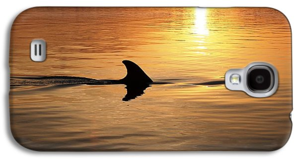 Dolphin Tapestries - Textiles Galaxy S4 Cases - Dolphin Sunrise Galaxy S4 Case by Fred Benavidez