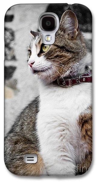 Animal Pyrography Galaxy S4 Cases - Domestic cat Galaxy S4 Case by Jelena Jovanovic