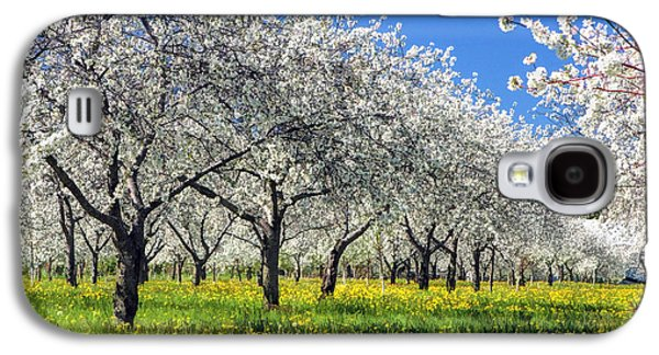 Cherry Blossoms Galaxy S4 Cases - Door County Cherry Blossoms Galaxy S4 Case by Christopher Arndt