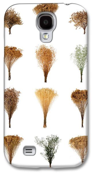 Dried Photographs Galaxy S4 Cases - Dried Flowers Collection Galaxy S4 Case by Olivier Le Queinec