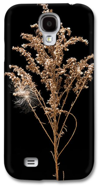 Dried Photographs Galaxy S4 Cases - Dried Goldenrod Galaxy S4 Case by Steve Gadomski