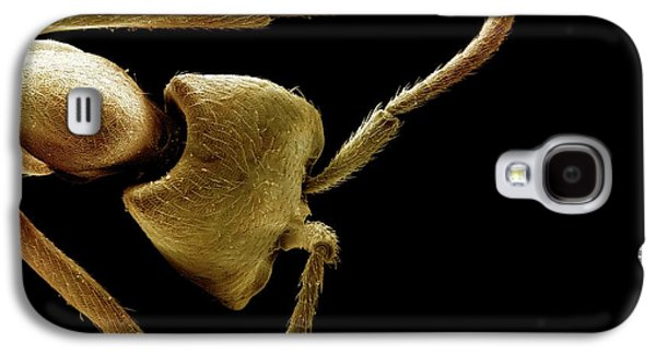 Driver Ant Head Galaxy S4 Case by Clouds Hill Imaging Ltd