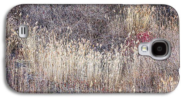 Fall Grass Galaxy S4 Cases - Dry grasses and bare trees in winter forest Galaxy S4 Case by Elena Elisseeva