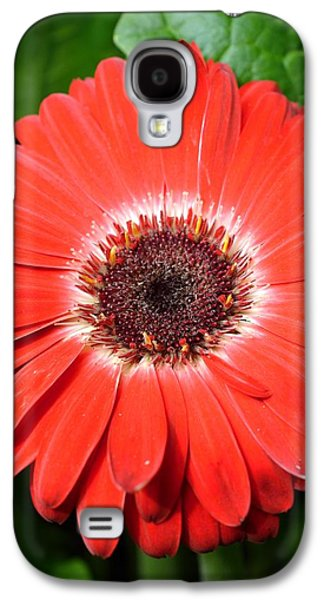 Nature Abstracts Galaxy S4 Cases - Dsc485d Galaxy S4 Case by Kimberlie Gerner