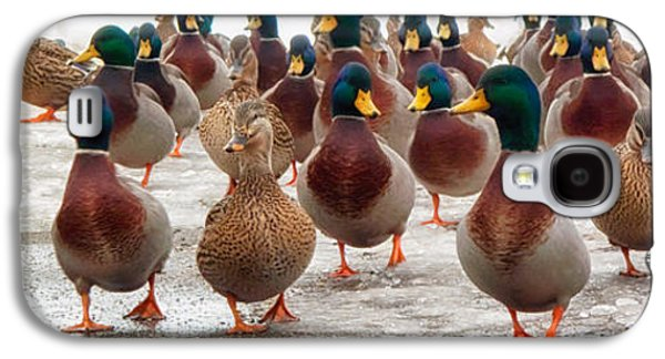 Friends Photographs Galaxy S4 Cases - DuckOrama Galaxy S4 Case by Bob Orsillo