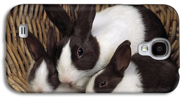 House Pet Galaxy S4 Cases - Dutch Rabbit With Young Galaxy S4 Case by E A Janes
