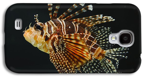 Underwater Photos Galaxy S4 Cases - Dwarf Lionfish Galaxy S4 Case by John Shaw