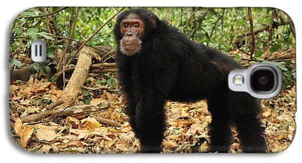 Eastern Chimpanzee Gombe Stream Np Galaxy S4 Case by Thomas Marent