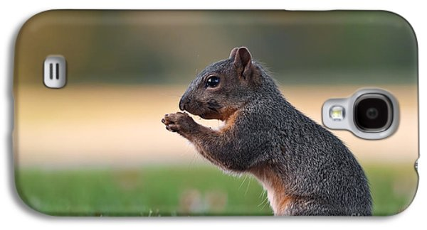 Fox Squirrel Galaxy S4 Cases - Eastern Fox Squirell Galaxy S4 Case by Brandon Alms