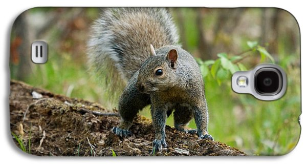 Sciurus Carolinensis Galaxy S4 Cases - Eastern Gray Squirrel Galaxy S4 Case by Linda Freshwaters Arndt