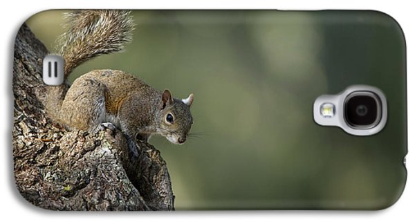 Eastern Gray Squirrel, Or Grey Squirrel Galaxy S4 Case by Pete Oxford