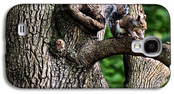 Eastern Grey Squirrel Galaxy S4 Case by Chris Flees