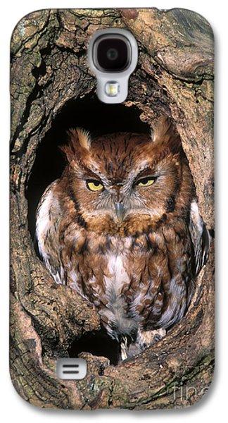 Morph Galaxy S4 Cases - Eastern Screech Owl - FS000810 Galaxy S4 Case by Daniel Dempster