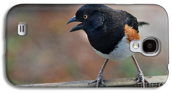 Photos Of Birds Galaxy S4 Cases - Eastern Towhee Galaxy S4 Case by Skip Willits