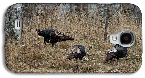 Meleagris Photographs Galaxy S4 Cases - Eastern Wild Turkeys Galaxy S4 Case by Linda Freshwaters Arndt