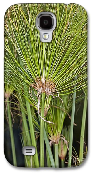 Papyrus Galaxy S4 Cases - Egyptian Paper Rush (cyperus Papyrus) Galaxy S4 Case by Dr Keith Wheeler
