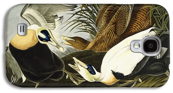 Eider Ducks Galaxy S4 Case by John James Audubon