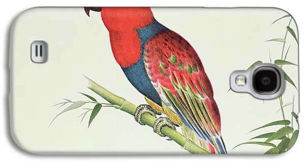 Talons Paintings Galaxy S4 Cases - Electus Parrot on a Bamboo Shoot Galaxy S4 Case by Chinese School