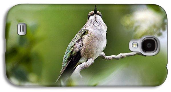 Christina Digital Galaxy S4 Cases - Elegant Hummingbird Galaxy S4 Case by Christina Rollo