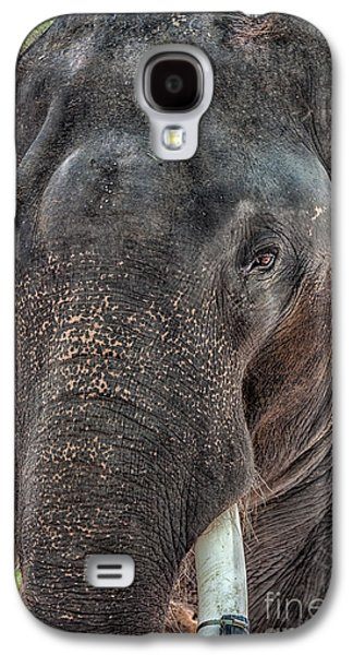 Tusk Galaxy S4 Cases - Elephant Galaxy S4 Case by Adrian Evans