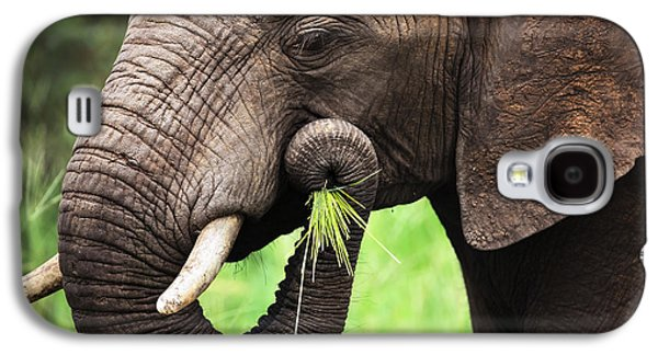 Green Galaxy S4 Cases - Elephant eating close-up Galaxy S4 Case by Johan Swanepoel