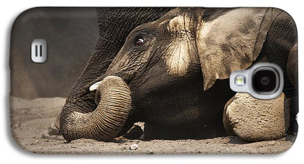 Play Photographs Galaxy S4 Cases - Elephant - lying down Galaxy S4 Case by Johan Swanepoel