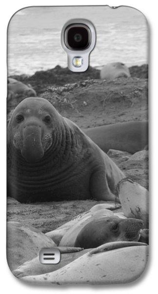 Ano Nuevo Galaxy S4 Cases - Elephant Seal Bull Galaxy S4 Case by Gwendolyn Barnhart