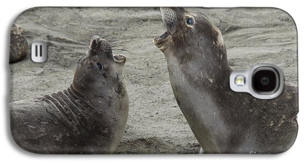 Ocean Mammals Galaxy S4 Cases - Elephant Seal Confrontation Galaxy S4 Case by Mark Newman