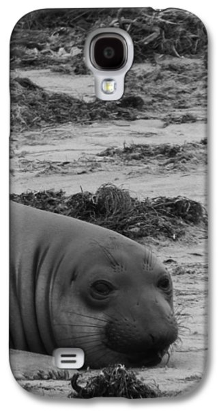 Ano Nuevo Galaxy S4 Cases - Elephant Seal Conteplation Galaxy S4 Case by Gwendolyn Barnhart