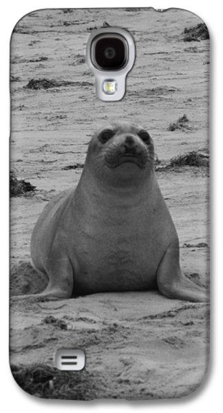 Ano Nuevo Galaxy S4 Cases - Elephant Seal Galaxy S4 Case by Gwendolyn Barnhart