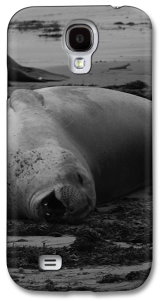 Ano Nuevo Galaxy S4 Cases - Elephant Seal Laughter Galaxy S4 Case by Gwendolyn Barnhart
