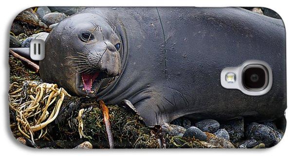 Ano Nuevo Galaxy S4 Cases - Elephant Seal of Ano Nuevo State Reserve Galaxy S4 Case by Priscilla Burgers