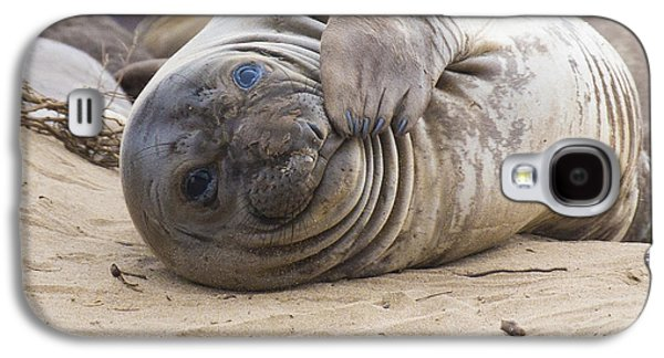 Ano Nuevo Galaxy S4 Cases - Elephant Seal Pup Galaxy S4 Case by Curt Lerner