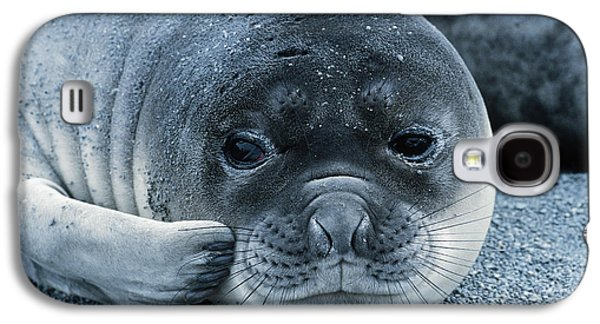 Ocean Mammals Galaxy S4 Cases - Elephant Seal Pup Galaxy S4 Case by Gregory G. Dimijian, M.D.