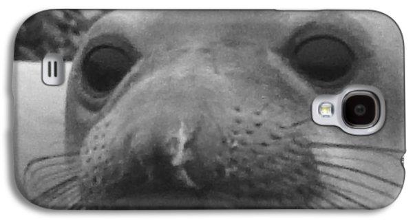 Ano Nuevo Galaxy S4 Cases - Elephant Seal Smirk Galaxy S4 Case by Gwendolyn Barnhart